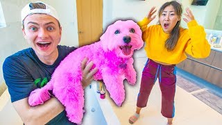 Download I DYED HER DOG PINK!! (PERMANENT) Mp3 and Videos