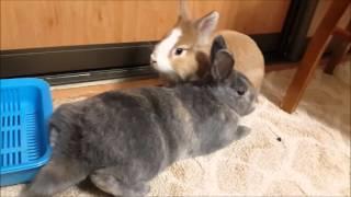 Кролики дома - это...