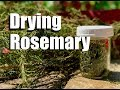 How to Dry Rosemary - Two Ways - Quick and Simple