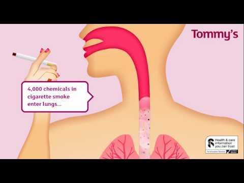 Ron jeremy deepthroat tube