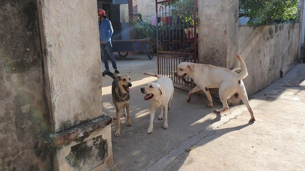 Tạm biệt Nam Định, Kim Chi vẫn còn lưu luyến bạn cún hàng xóm