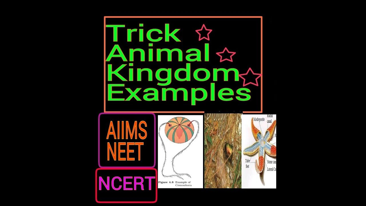 Animal Kingdom Trick Phylum Examples Of Phylumncert Examples