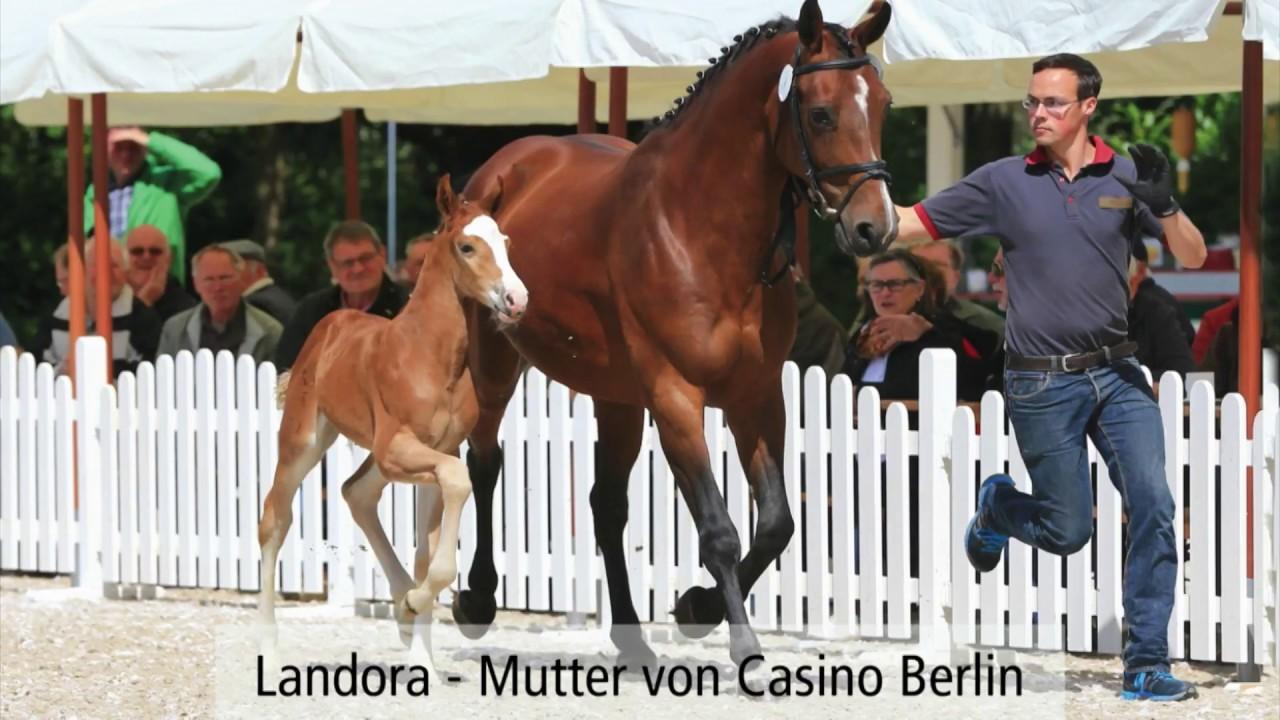 Casino Berlin Hengst