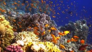 blue hole of Dahab 7 / 4 / 2017 البلول هول - دهب