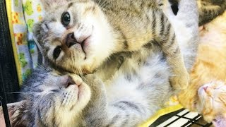 POTTY TRAINING BABY KITTENS | how we tell if our kittens need the litter box