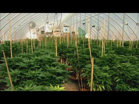 Marijuana legalization on the horizon for NM