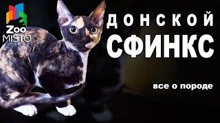 Донской Сфинкс - Все о породе Кошки | Кошка породы - Донской Сфинкс