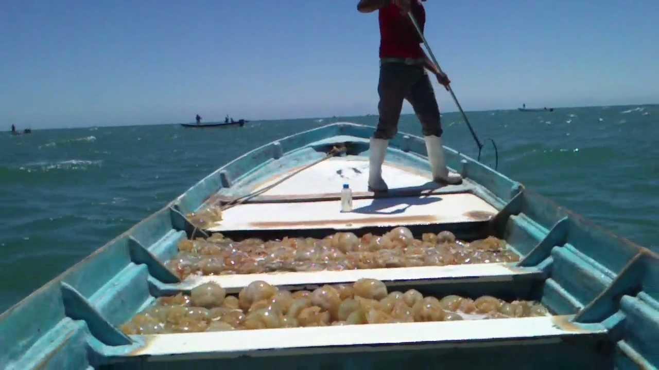Resultado de imagen para golfo de santa clara pescadores