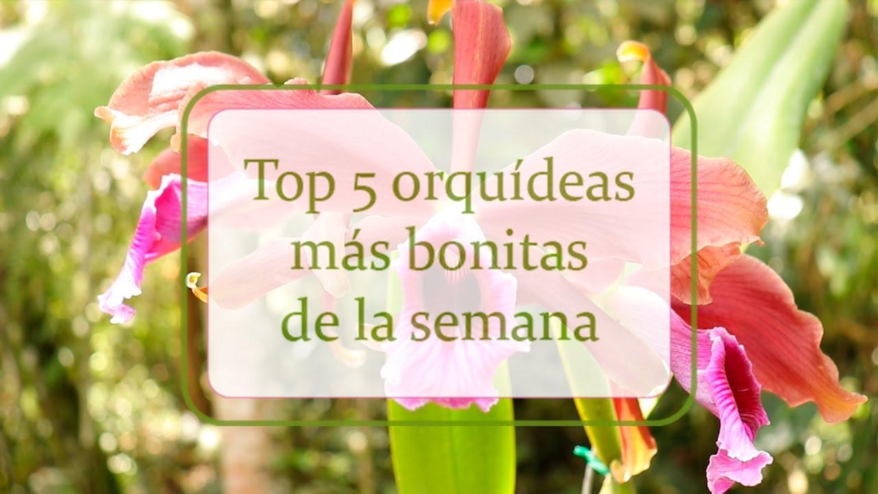 Top 5 | Orquídeas más bonitas de la semana
