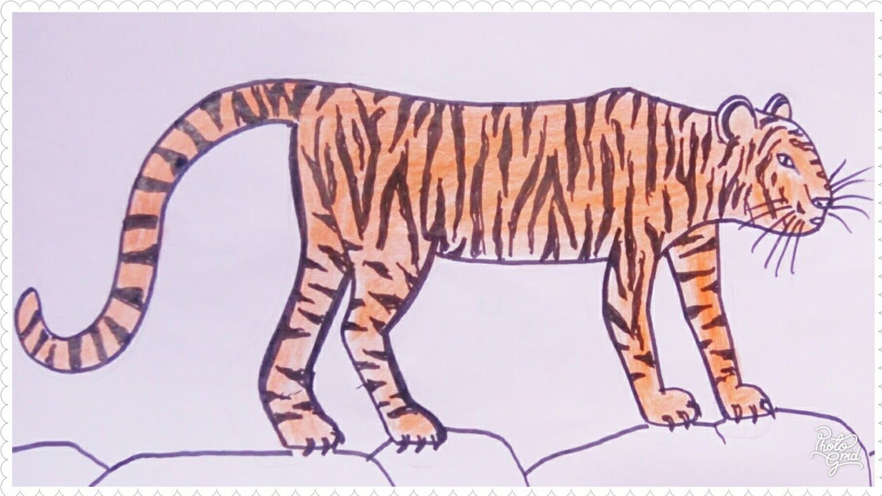 Easy Ways To Draw A Tiger