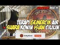 Terapi Gemercik Air Suara Konin Isian Cililin Full Masteran(.mp3 .mp4) Mp3 - Mp4 Download