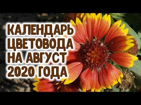 ЛУННЫЙ КАЛЕНДАРЬ ЦВЕТОВОДА НА АВГУСТ 2020 ГОДА. Агрогороскоп цветы в августе 2020 | многолетние | урожайный | горяченко | посадить | красивые | августе | огород | цветы | самые | раиса