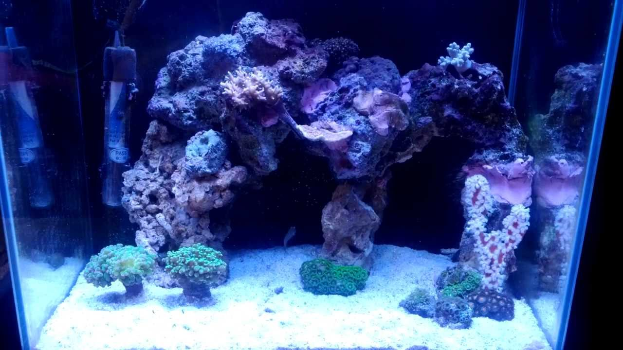 Nano Reef   Sick Aquascape   YouTube