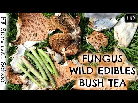 REAL Bushcraft Breakfast In A Thunderstorm - Fungus , Wild Edible, Bush Tea - HD Survival Video