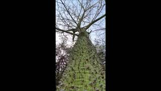 Необычное дерево из Анталии
