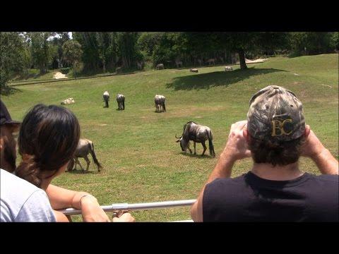 Serengeti Safari Busch Gardens