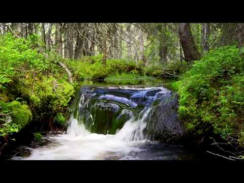Finlandia Hymn - Jean Sibelius - Club For Five