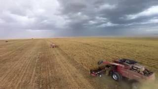Nourish Farms Inc   Pea Harvest 2016