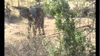 Krugerpark Compleet