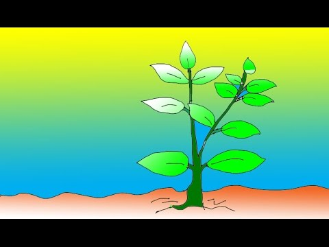 Picture Of Plants For Kids | www.pixshark.com - Images ...