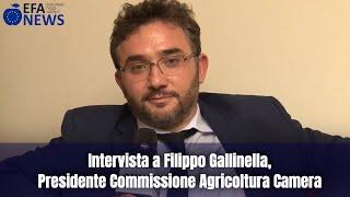 Intervista a Filippo Gallinella, Presidente Commissione Agricoltura Camera