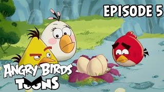 Angry Birds Toons | Egg Sounds - S1 Ep5
