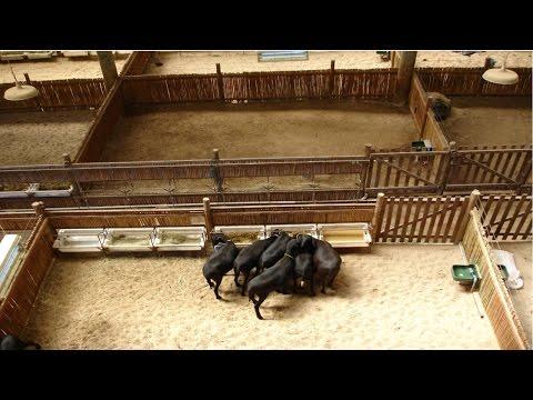 Instalações para Ovinos - Manejo de Pastagem