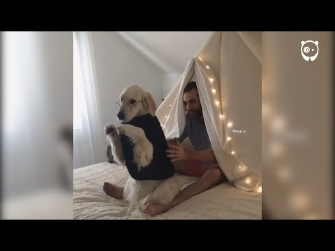 Guy teaches dog to trust fall