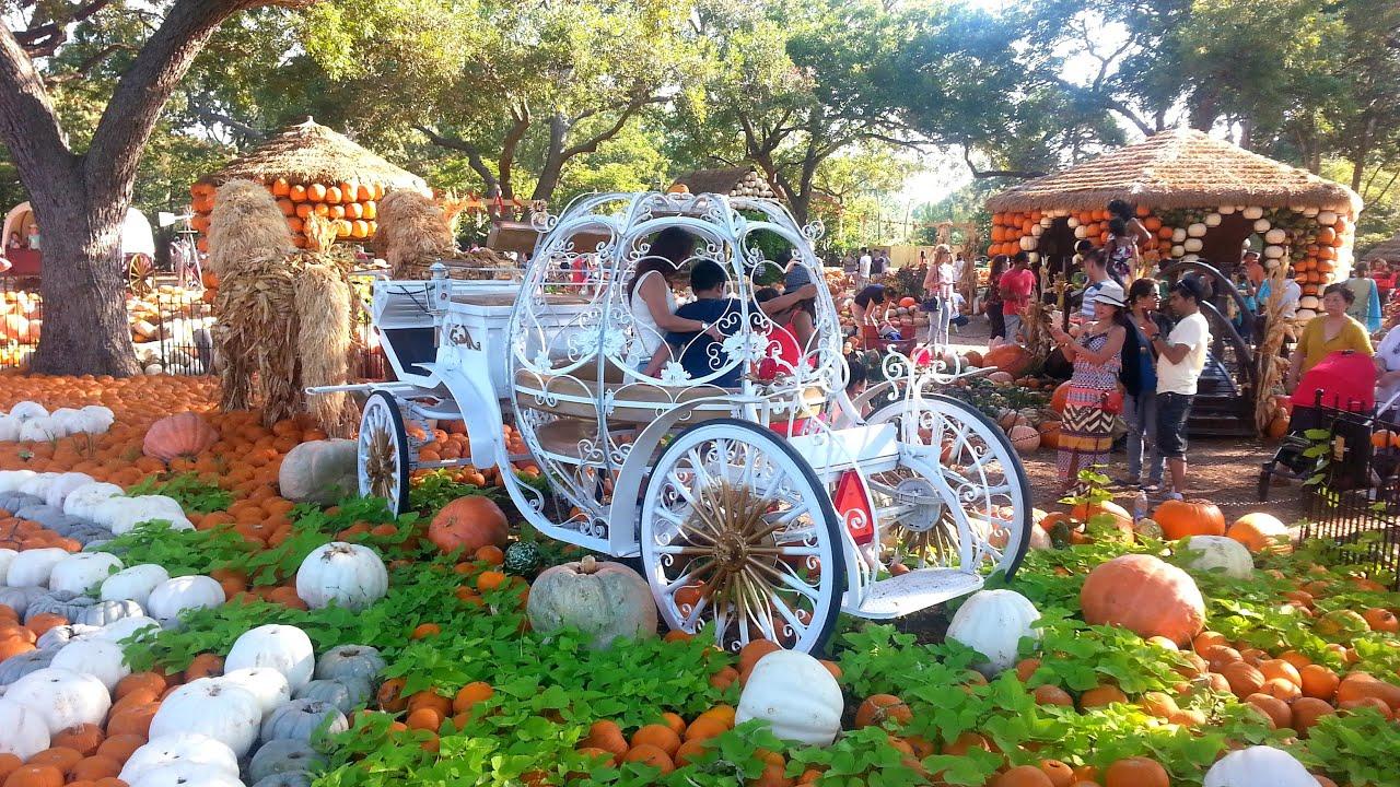 Pumpkin Village In Dallas Arboretum And Botanical Garden