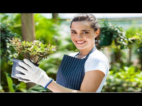 Clique e veja o vídeo Treinamento de Florista - Como Conservar Flores