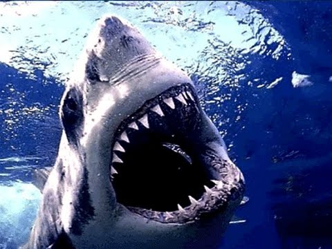 Amazing Life Shark Discovery channel Documentary HD 2015
