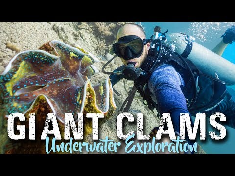 Camiguin Island CLAM SANCTUARY | Philippines Travel Vlog 2018