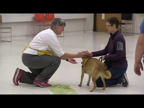 Dog Training Classes | Animal Humane Society