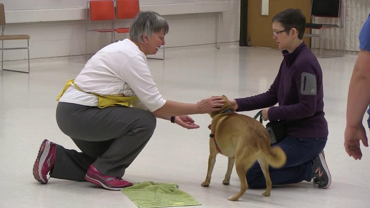 Dog Training Classes | Animal Humane Society