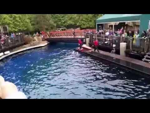Vancouver Aquarium - Dolphin Show