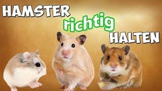 Hamster / Zwerghamster als Haustier! Hamster artgerecht halten / Tipps!!