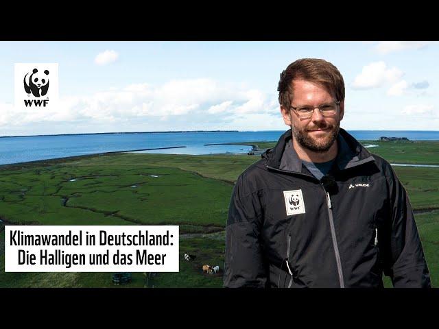 Meeresspiegel steigt in Deutschland: Die Halligen sind bedroht