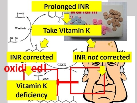 004 How Vitamin K affects INR?