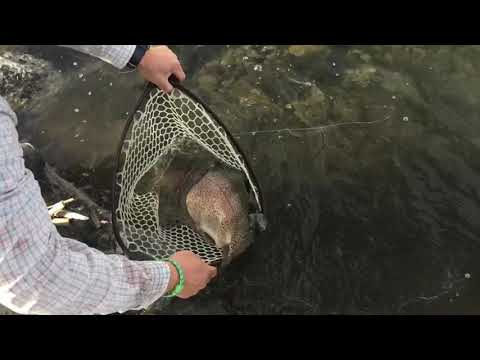 "Rocky Ford Creek ""in The Net"""
