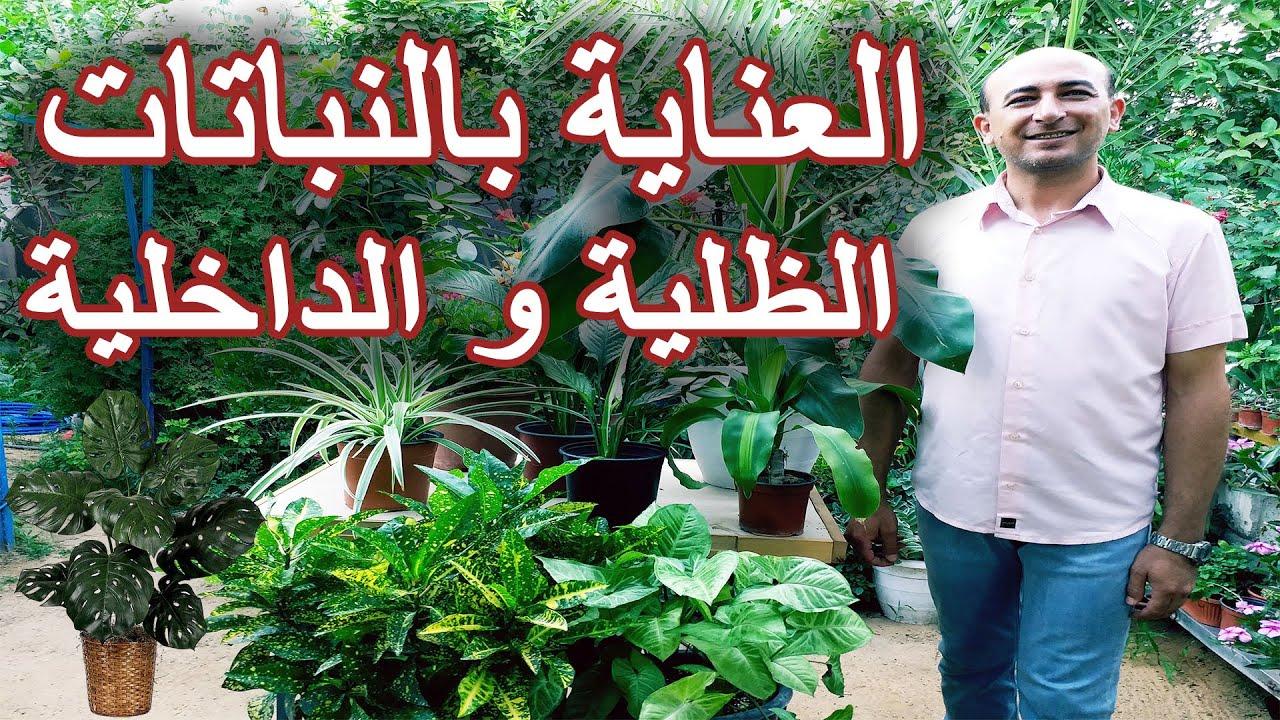 العناية بالنباتات الظلية, رعاية النباتات الداخلية, الاعتناء بالنباتات المنزلية, Indoor Plants Care