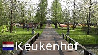 HOLLAND: Keukenhof - world