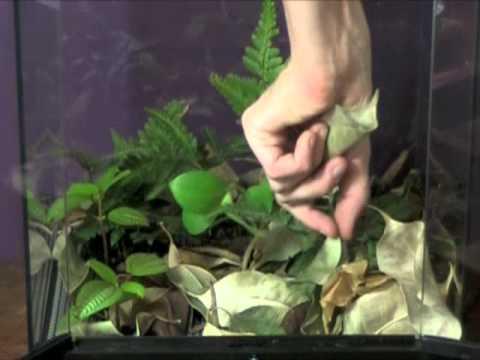 Forest Floor Terrariums Youtube