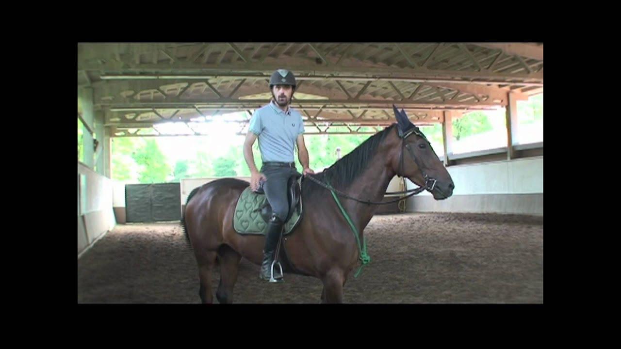 nuovo concetto online qui design popolare Francesco Vedani Equitazione - Transizioni con un puledro da salto ostacoli