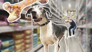 Buying Worlds Tallest Dog EVERYTHING He Touches!