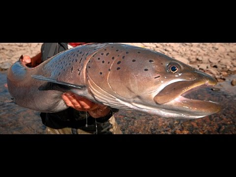 рыбалка на тайменя в монголии маршруты
