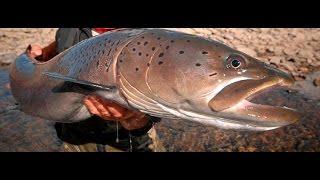 Рыбалка на Тайменя. Якуб Вагнер  Монголия часть  2. Monster fish