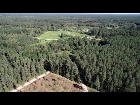 Miškai dingsta ir Vilniuje: iškirsti šimtamečio pušyno hektarai