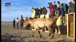 Treue Freunde und  Helfer der Menschen   Pferde Doku deutsch