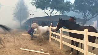 Horses freed from enclosure to escape California wildfire