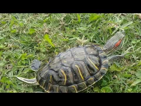 Cute Turtle Compilation